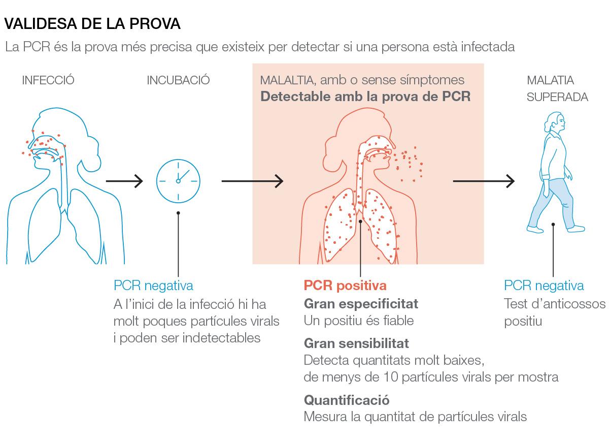 Validez de a prueba de PCR para la covid-19: en qué fase de la enfermedad es válida.