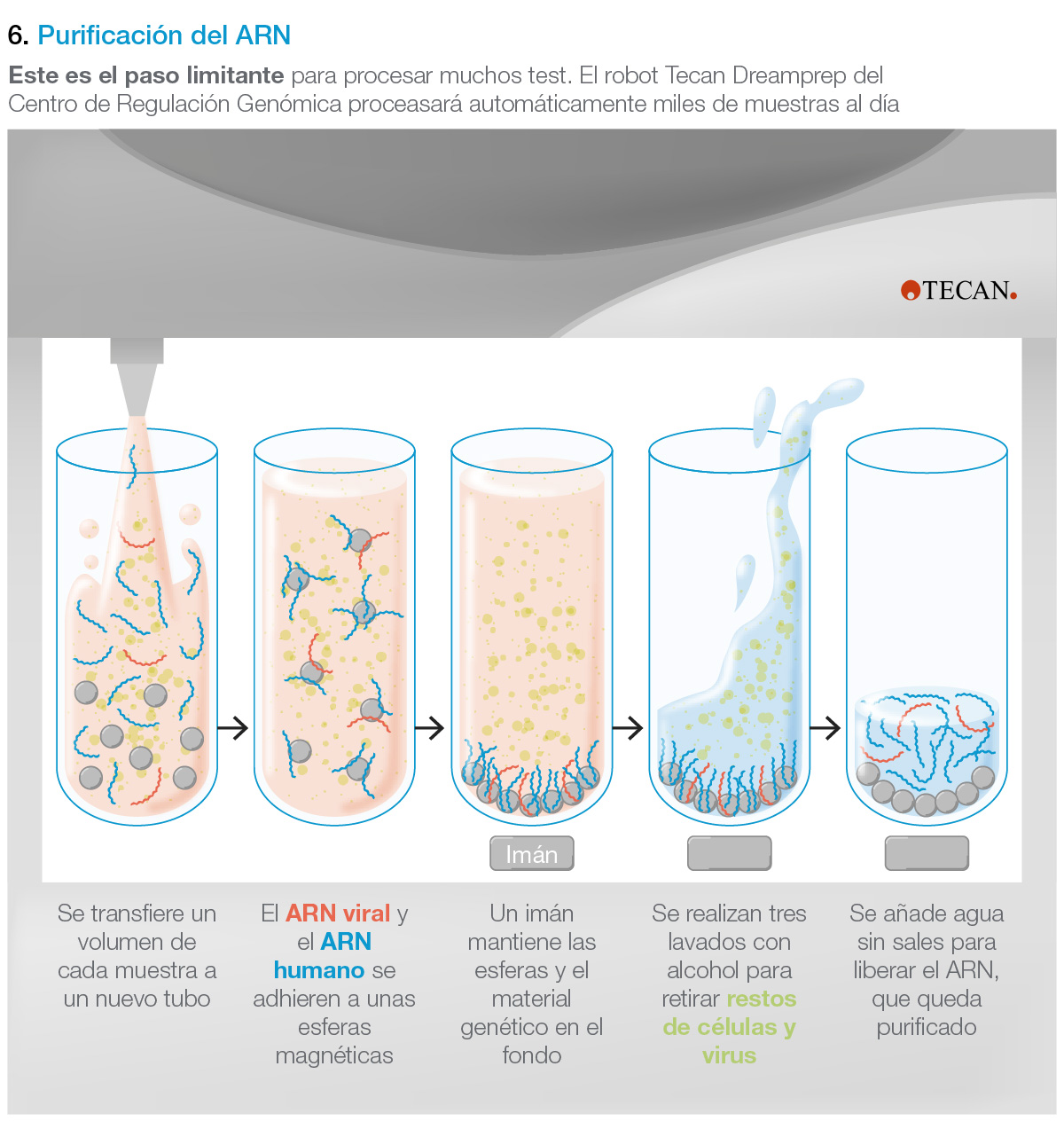Purificación del ARN mediante robot Tecan Dreamprep para realizar una test de PCR para el covid-19