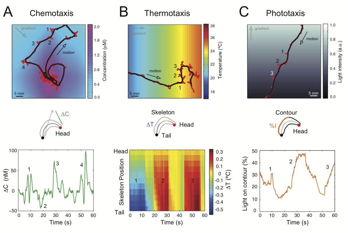 Tracking Fruit Flies To Understand The Function Of The Nervous